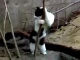 Кошка танцует как на шесте ))